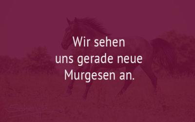 Kein Pferd in Aussicht